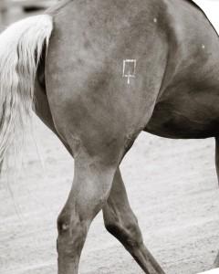 Paq ranch brand. Photo by Avolte Photo