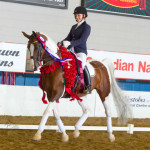 PR Captain Hook+//, Crusoe's 3/4 brother and 8-time Arabian National Champion