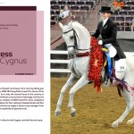Cygnus-Mimi-ASH-story