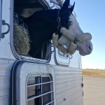 Off-to-Anoka-Equine
